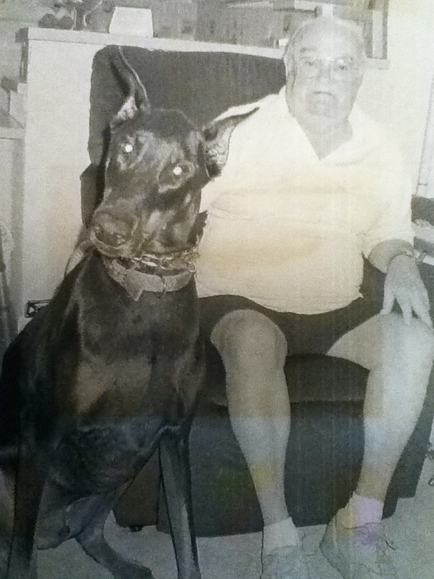 "Bob Althoff of River Haven Mobile Home Park, south of Punta Gorda, FL holds on to ""Duke V,"" his 109-pound pet Doberman. The octogenarian piloted a B-29 ""Superfortress"" on 35 missions over Japan during the closing months of World War II. Sun photo by Don Moore"